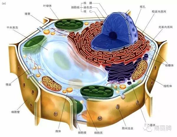 植物细胞结构